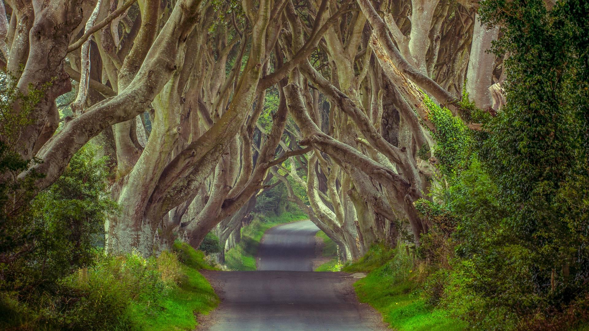 The Dark Hedges: il viale in Irlanda che sembra essere uscito da un film fantasy