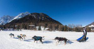 alpen trail