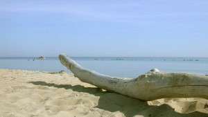 spiagge molise
