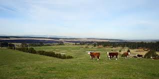 Fare una fattoria in Australia