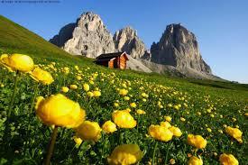 Stai cercando un hotel in Val Di Fassa? Per prenotare visita www.valdifassa.com !