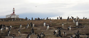 Patagonia-pinguinera