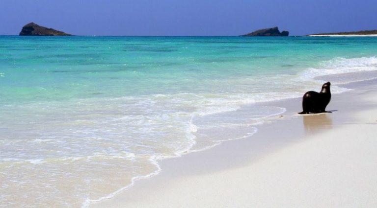 Galapagos: un sogno ad occhi aperti