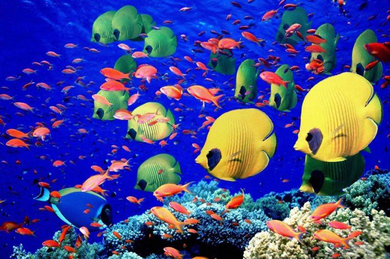Al mare in Egitto: le più belle località per una vacanza da sogno
