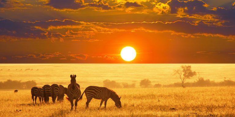 Vacanza in Namibia tra safari e città fantasma