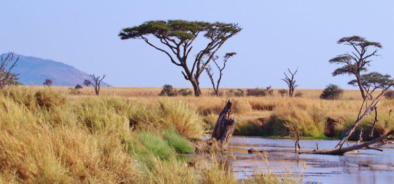 Tanzania: la Guida Completa