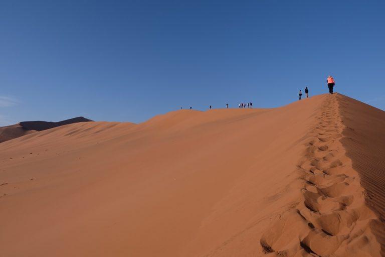 Safari in Namibia: cosa c'è da vedere