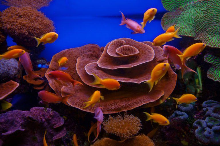 Vacanze sul Mar Rosso: Guida Completa e consigli di viaggio