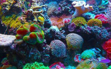 Barriera-corallina