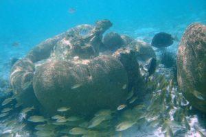 Barriera-corallina-caraibi