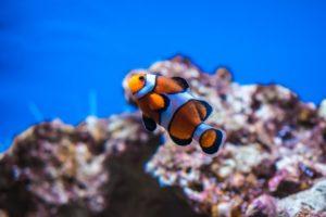 Barriera-corallina-maldive
