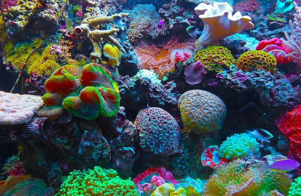 Barriera corallina le mete pi belle per scoprire i for Immagini coralli marini