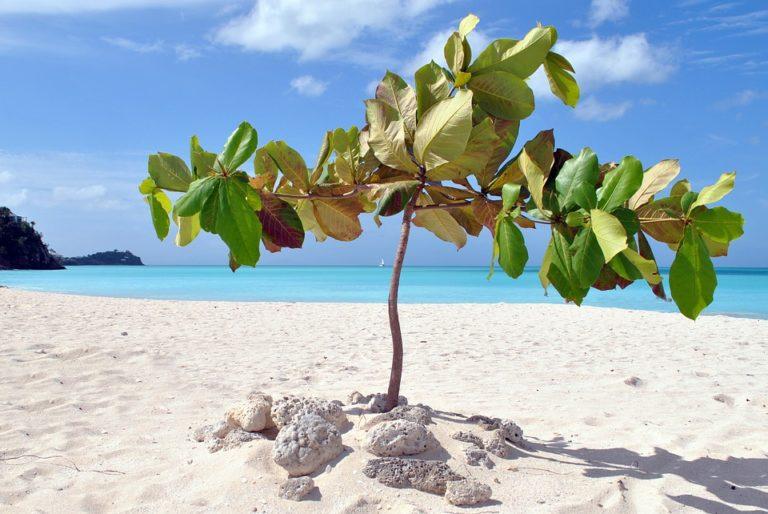 Antigua: la Guida Completa per una vacanza da sogno