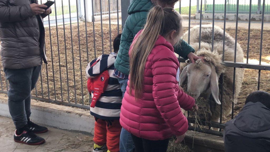 bambini nella fattoria del Fico di Bologna